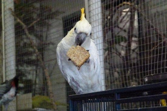 World Parrot Refuge: Cockatoo