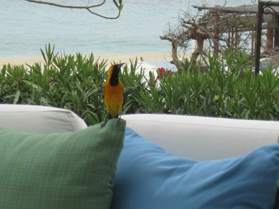 Las Ventanas al Paraiso, A Rosewood Resort: Our Friend visited us every morning! So cute!