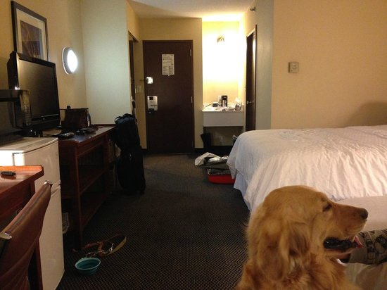 Four Points by Sheraton Chicago O'Hare Airport: 大型犬もOK