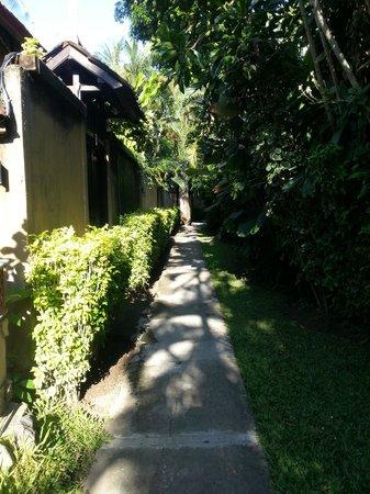 Villa Coco : A walk to the villa
