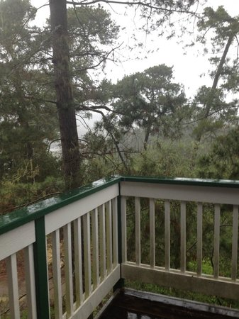Cambria Pines Lodge : view from private deck