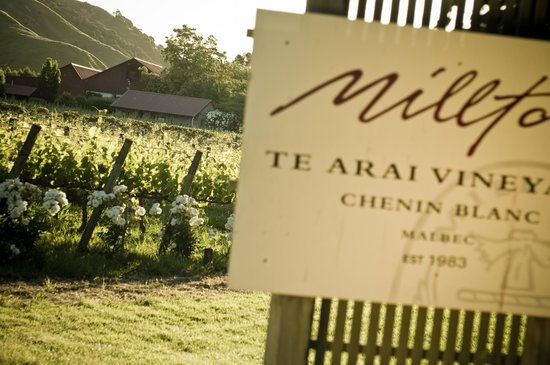 Millton Vineyards & Winery : Millton Te Arai Vineyard