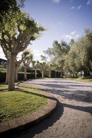 Millton Vineyards & Winery: Millton Front Driveway
