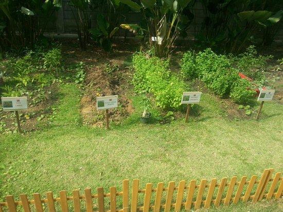 ibis Bangkok Riverside : Hauseigener Kräutergarten