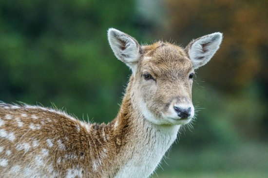South West Deer Rescue