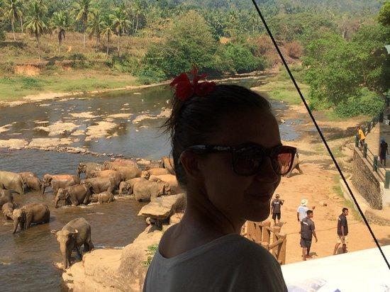 Hotel Elephant Park: Вид из ресторана отеля