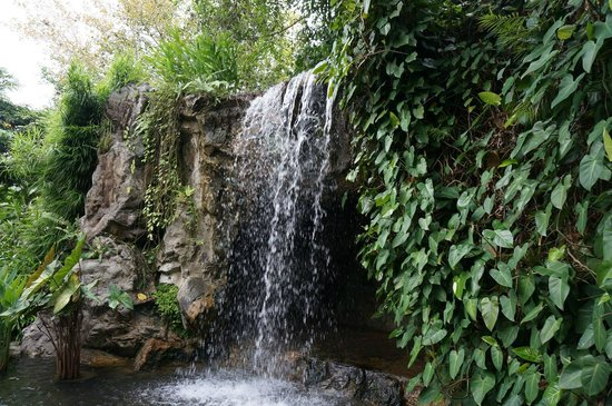 Jardines Botánicos de Singapur: a small waterfall