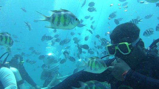 Seawalker Tours: 撮影したVIDEOから静止画Capture