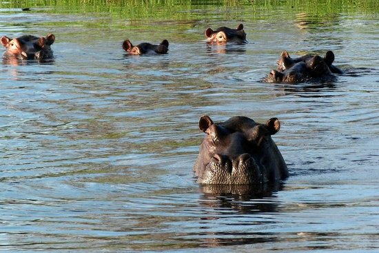 Photgraphic safari shot.