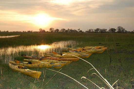 African Safari Guru Tours & Lodge Transfers : Kayaking in the Okavango Delta does not get better than this!