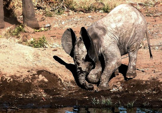 African Safari Guru : Splish splash I am having a bath in Mashatu, Northern Tuli Block, Botswana