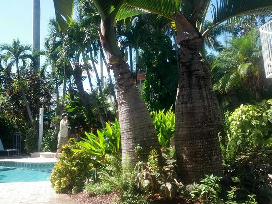 Hotel Lush Royale: Palm trees in pool area