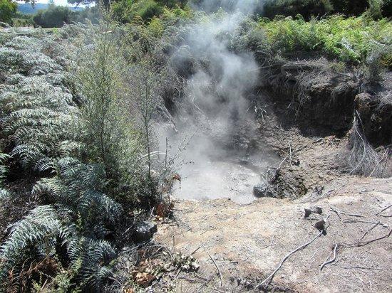 Kuirau Park: Smoking thermals