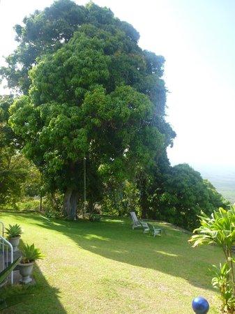 Ka'awa Loa Plantation: grounds