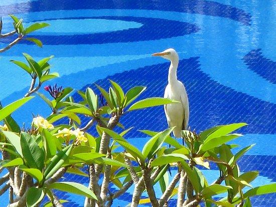 Uga Ulagalla : Heron with pool view