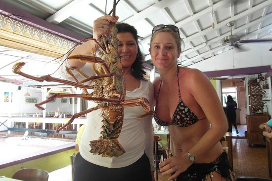 La Villa Creole: 2.4 kg de langouste vivante ...