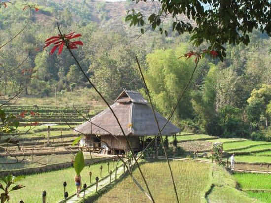 Kamu Lodge : The lodge