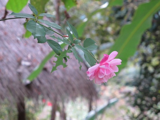 Kamu Lodge: Flowers in the lodge