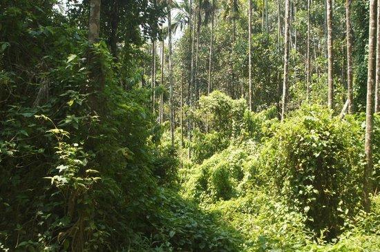 Rippon Mount Resorts: Way To Nature WaterFall Inside resort