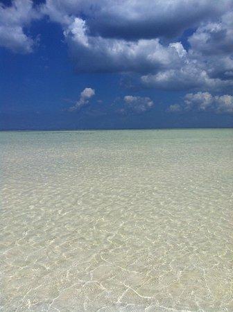 Waikiki Zanzibar Resort: Mare con bassa marea