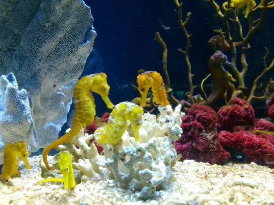 L'Aquarium de Barcelona: .