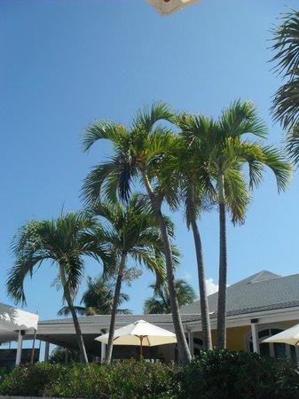 Club Med Columbus Isle : Palmiers