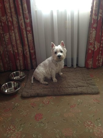 The Chesterfield Mayfair: VIP  very important pet