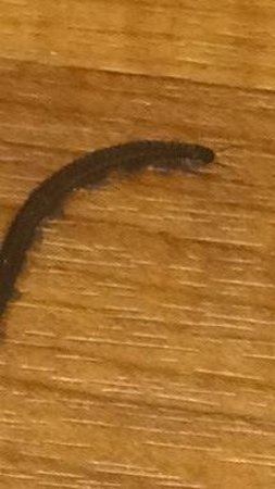 Extended Stay America - Pittsburgh - Airport: Millipede in the bathroom.