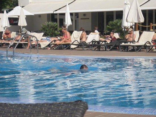 Melia Madeira Mare Resort & Spa : Pool