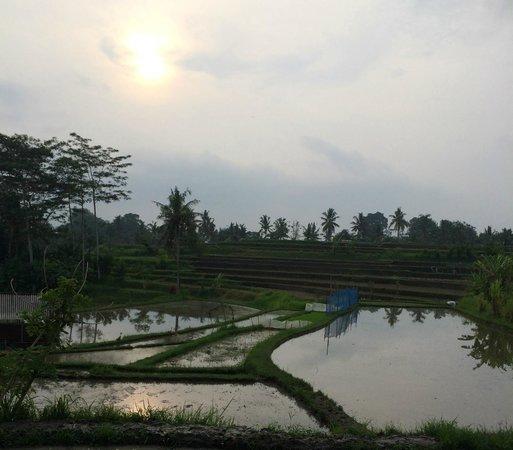 Tirta Asri Ubud : Walk into town!!!