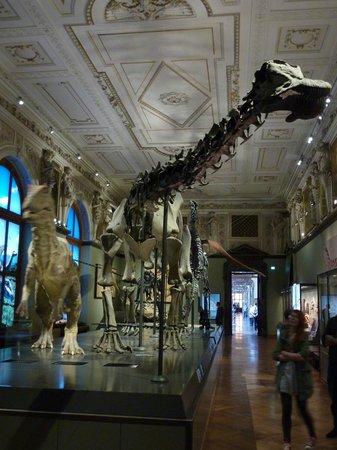 Muséum d'histoire naturelle de Vienne : Dinosaurs