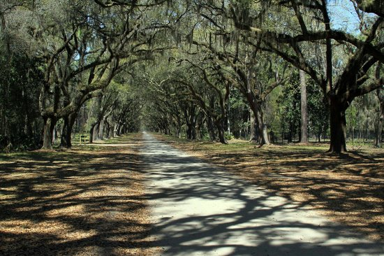 Wormsloe Historic Site: Wonderful and relaxing visit