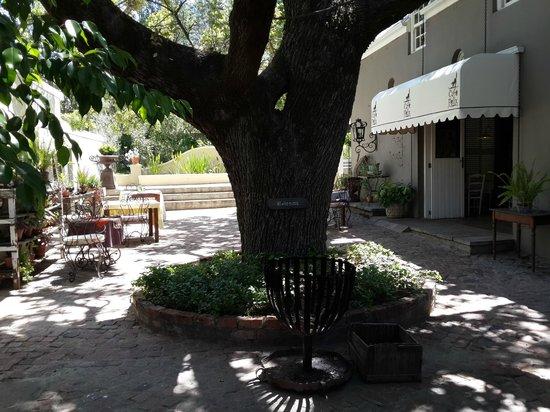 Old Oak Manor and Cafe Felix: Oak tree at the entrance