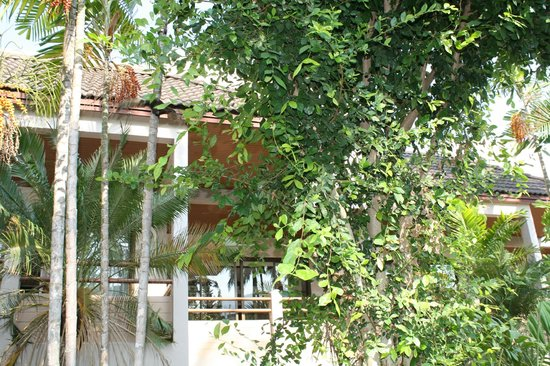 Coconut Village Resort : территория отеля