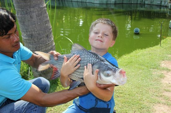 Hua Hin Fishing Lodge: Siamese Carp