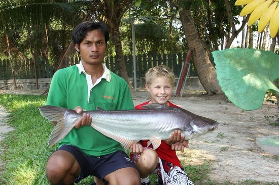 Hua Hin Fishing Lodge: Striped Catfish