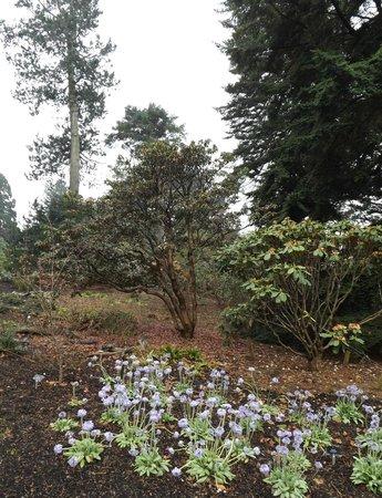 Royal Botanic Garden Edinburgh: Primula & trees