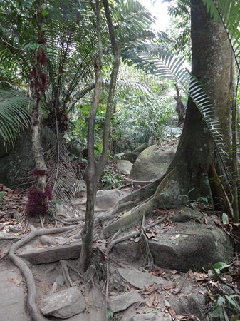 FRIM -Forest Research Institute of Malaysia: Rainforest
