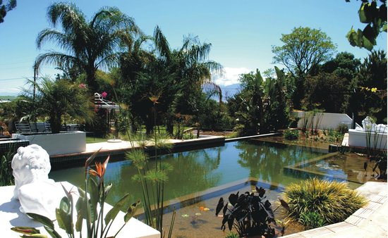 Riebeek Valley Hotel : Organic-pool