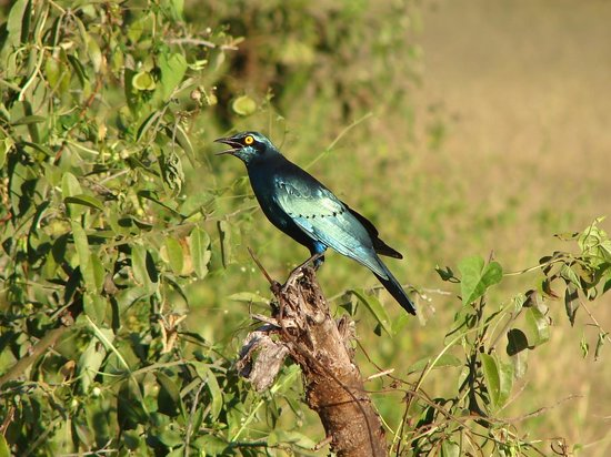 Imbabala Zambezi Safari Lodge: Magnificent bird life