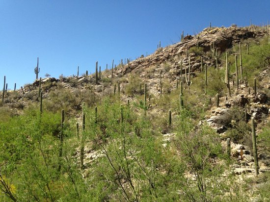 Loews Ventana Canyon Resort: beautiful