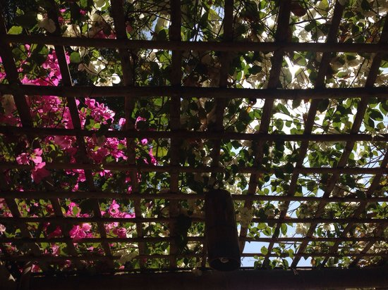 Black Bamboo : Lunch under the trellis