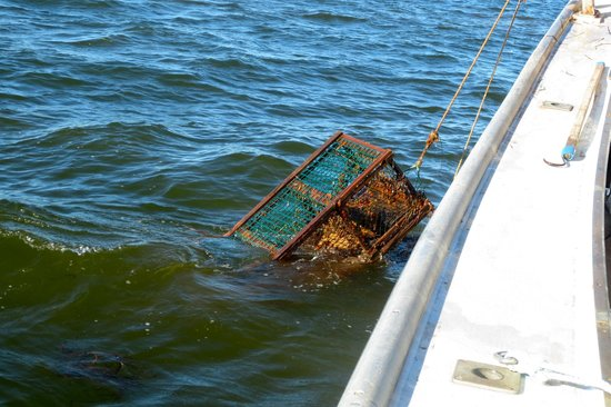 Top Notch Charters - Lobster Excursions: Hauling them up ...