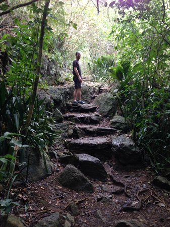 Reef Bay Trail : anient steps