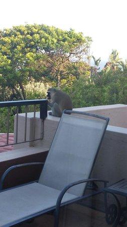 Teremok Marine: Monkey on the balcony!