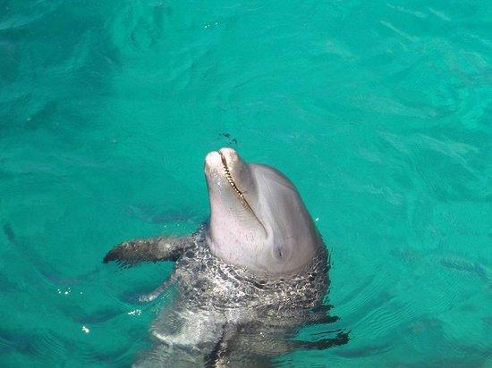 Dolphin Discovery Isla Mujeres: Golfinho - Lindo e meigo