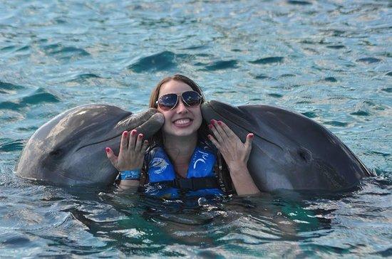 Dolphin Discovery Isla Mujeres: Experiência incrivel e indescritivel - um sonho!