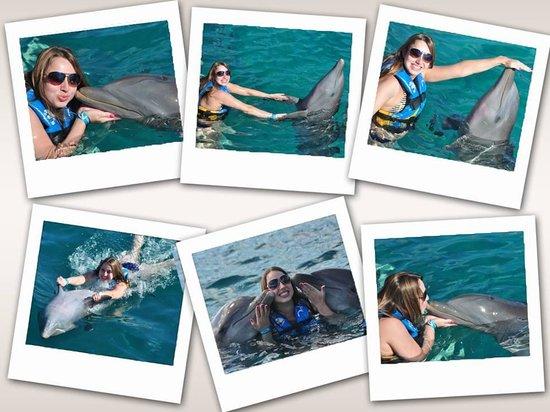 Dolphin Discovery Isla Mujeres : Experiência incrivel e indescritivel - um sonho!