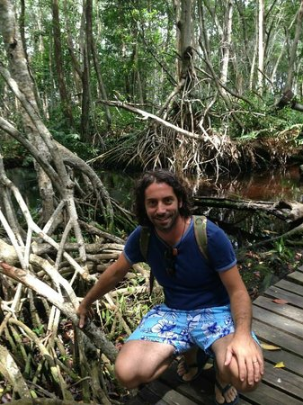 Celestun Wildlife Refuge : Le mangrovie sulla passerella