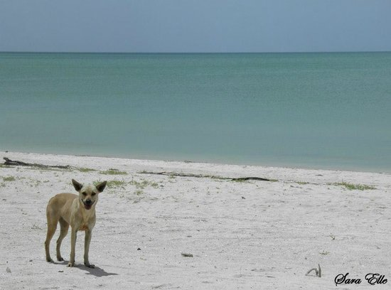 Celestun Wildlife Refuge : La spiaggia